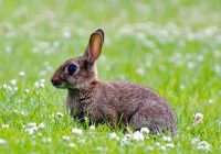 keep bunnies out of the garden