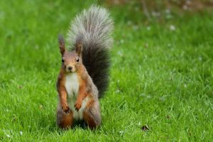 How to Keep Squirrels Out of the Garden Keep Animals Out of Garden