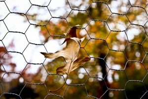 keep-animals-out-with-chicken-wire